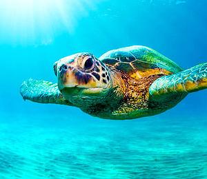 Key West Dive Center
