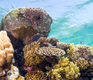 The Reef's Importance to Key West Scuba Diving