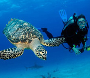 Key West Scuba Diving Adventures