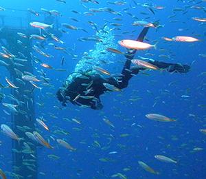 Key West Scuba Diving Has Never Been Better