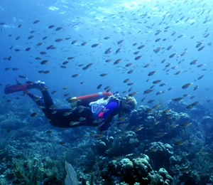 Key West Scuba Diving More Affordable Than Ever
