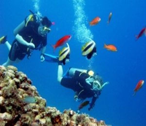 Key West Scuba Diving Soothes the Senses