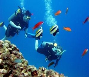 Key West Scuba Diving Soothes the Senses