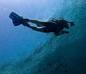 Why We Use Cressi and Mares for Diving Trips