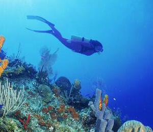 Taking a Scuba Diving Vacation To Key West