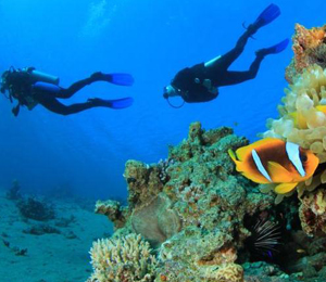 Travelers Love Key West Scuba Diving | Scuba Key West