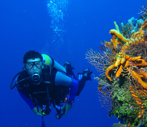 Information to Know Before Diving