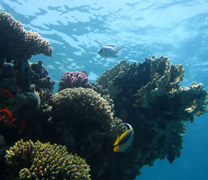 Key West Dive Center Makes Your Florida Vacation Even More Adventurous