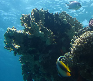 Toppino's Reef