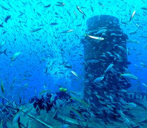Cayman Salvager
